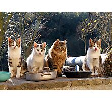 Cats Tip #1 : Wait near your plate, soon or later you will get food Photographic Print