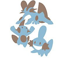 Pokemon Evolution Of Mudkip Photographic Print