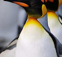 Walking Penguins by mc27