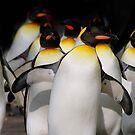 Walking Penguins II by mc27
