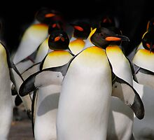 Walking Penguins II by mc27
