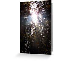 Autumn Sun Rays #42 Greeting Card