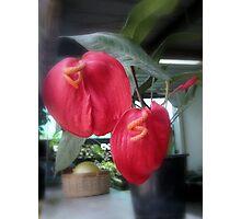 Flamingo Plant Photographic Print