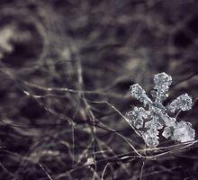 Crystalline by failingjune
