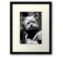 Yorkie Sweater Framed Print