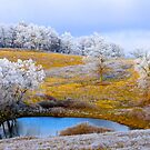 Winter Trees, Brannon Mt. NW Arkansas, USA by NatureGreeting Cards ©ccwri