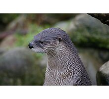 Portrait of an Otter Photographic Print