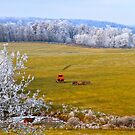 Out To Pasture,  Brannon Mt. NW Arkansas, USA  by NatureGreeting Cards ©ccwri