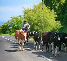 Farmer and cows by Gaspar Avila