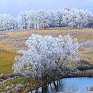 Scenic Winter, Brannon Mt. NW Arkansas, USA  by NatureGreeting Cards ©ccwri