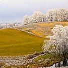 Golden Winter, Brannon Mt. NW Arkansas, USA by NatureGreeting Cards ©ccwri