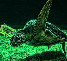 Sea Turtle by jwinman