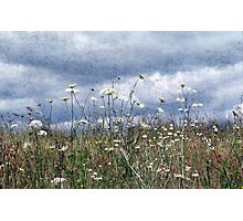 Summertime in the North West Photographic Print