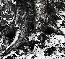Tree trunks with snow in Black and white by Jeffrey  Sinnock