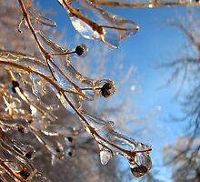 Frozen by Carole Brunet
