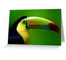 CHANNEL BILLED TOUCAN Greeting Card
