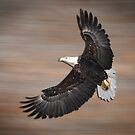 An Artistic Presentation Of The American Bald Eagle by Thomas Young