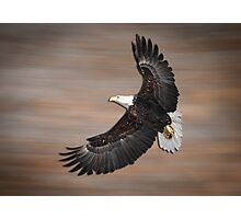 An Artistic Presentation Of The American Bald Eagle Photographic Print