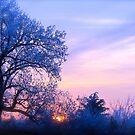 Winter Sunset, Brannon Mt. NW Arkansas, USA by NatureGreeting Cards ©ccwri