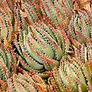 Cacti Cluster by Belinda Osgood