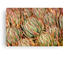 Cacti Cluster Canvas Print