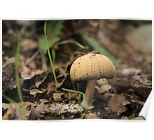 Mushroom Top Poster