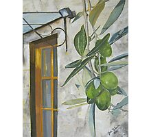 Olives in Chianti Photographic Print