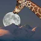Giraffes love lollipops by MooseMan