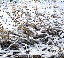 Snow that fell softly by Jeffrey  Sinnock