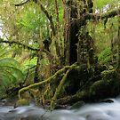 the magic tree by Donovan wilson