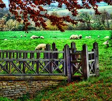 Pastures Green by WJPhotography