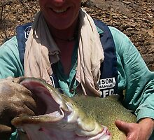 murray cod eildon by wildfish