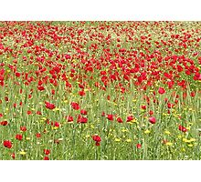 Meadow With Beautiful Bright Red Poppy Flowers Photographic Print