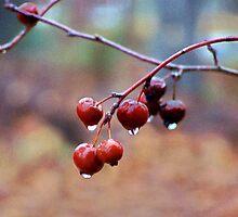 Wet Berries by Lisa Taylor