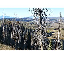 Gnarled Pine Overlook Photographic Print