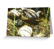 Swamp Hen and Chick Greeting Card