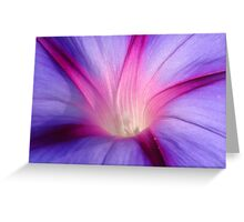 Lilac and Fuschia Morning Glory in Macro Greeting Card
