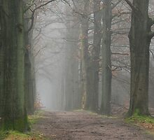 Venturing on a misty path ... by jchanders