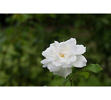The White Flower Photographic Print