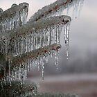 ice pine 08 by Roslyn Lunetta