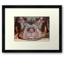 My Little Rottweiler Framed Print