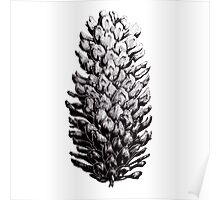 Blue Spruce Cone Poster