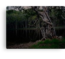 Saltwater NSW Australia Canvas Print