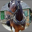 """""""This is prince a 16.1hh Clydsdale Horse"""" by Malcolm Chant"""