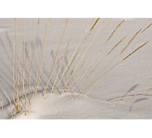 Shadowy weeds Photographic Print