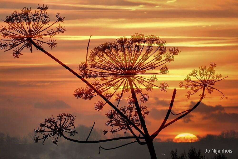 Hogweed Winter Sunrise #1 by Jo Nijenhuis