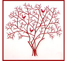Red Christmas Beauty Photographic Print