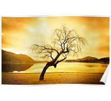 Another Tree in Wanaka Poster