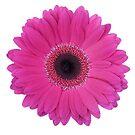 Pink Daisy by fantasytripp