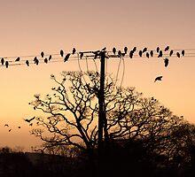 Batty Birdy by Steiner62